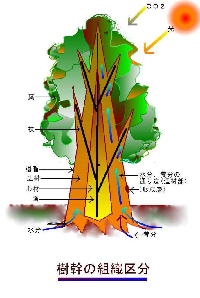森と木の物語 | 建築・インテリアに関する石材メディア